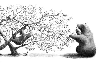 piccola orsa_7